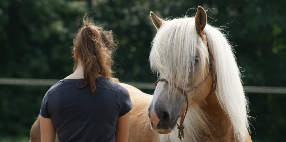 Horse in Mind, paardvriendelijk trainen, natural horsemanship, lichaamstaal