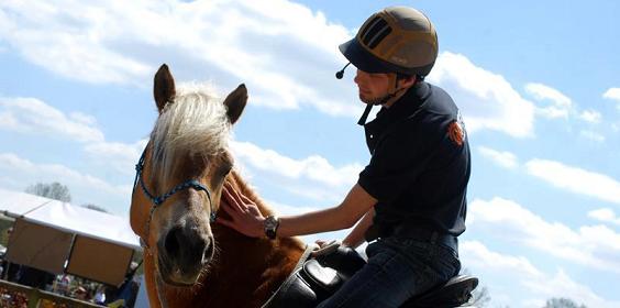 Niek Elings, evenementen, natural horsemanship cursus