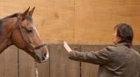 grondwerk met paarden, grondwerk methodes