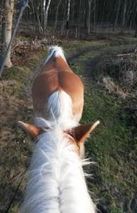 handpaarden, rijden met handpaard