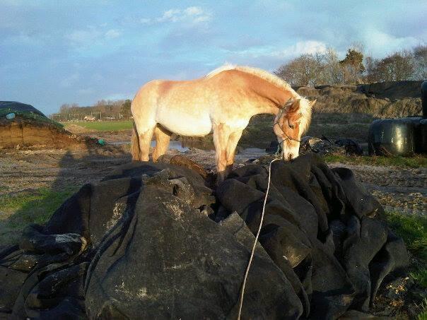 progressie met trainen, paard zeiltje