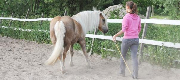 connectie met je paard