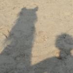 Samen een centaur zijn; ultieme eenheid met je paard?