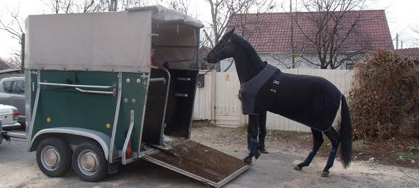 trailerladen paard, trailerlaad tips, yannick de muelenaere