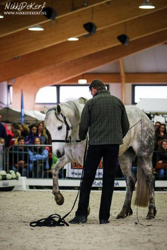 Chris Irwin natural horsemanship