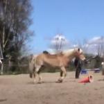 Grondwerk met drie paarden tegelijk!