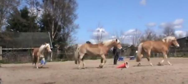 grondwerk met drie paarden