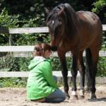 5 Ontstresstips van paarden