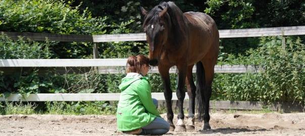ontstressen, wendela den tonkelaar, paarden spiegelen