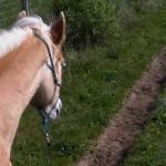 Met twee pony's op pad