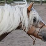 Welke spullen heb je nodig bij natural horsemanship?