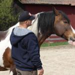 5 Communicatietips van paarden
