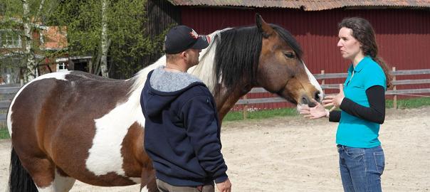 paarden communicatie, paardencoaching