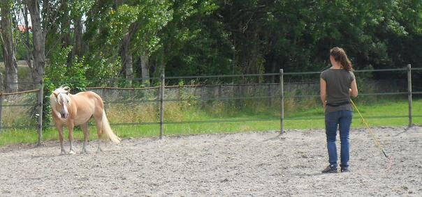 Help, mijn paard laat zich niet vangen!
