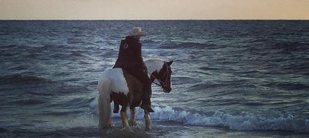 signe-sanne oortgijsen, paarden, paard op vakantie