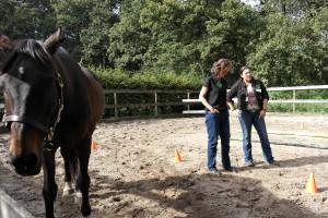 een muurtje opbouwen, paardencoaching