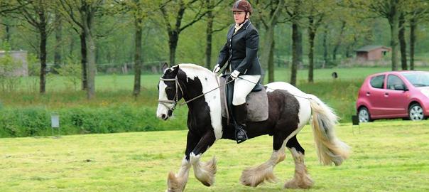 paard en sport