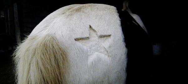 wintervacht, dekens, paardnatuurlijk