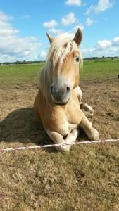 jong paard, sarina gul, uitdaging