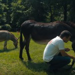 Nieuwe paardenapp verzamelt informatie over gedrag en gezondheid