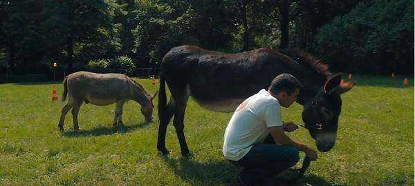 awinhorse app, paarden app, gezondheid paard