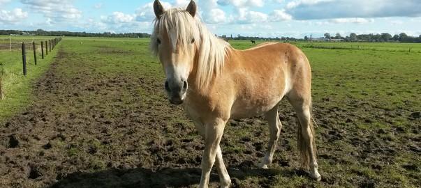Wandelen met jong paard, uitdaging