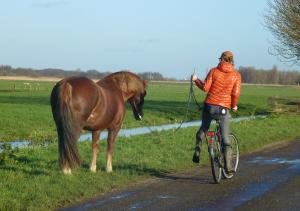 fietsen, fietsen met je paard, fietsen met paard, eva en fenna