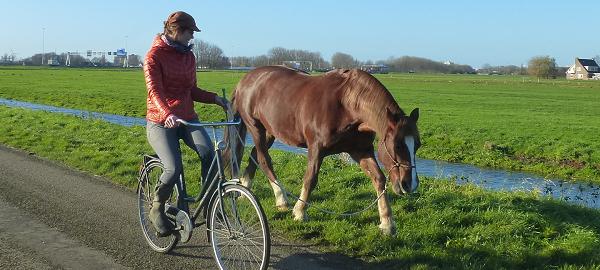 fietsen met paard, fietsen