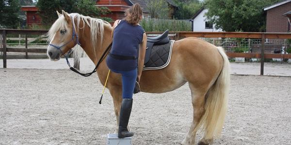 Stilstaan bij het opstappen – leer je paard inparkeren