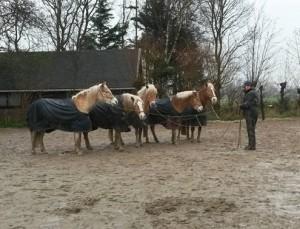parelli, communicatie, horsemanship, lichaamstaal