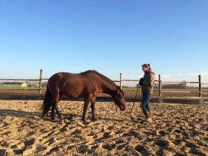 jong paard, grondwerk, lessen