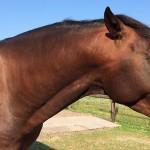 Lessen van een groen paard