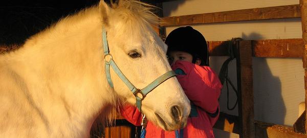 probleempaard, probleemgedrag paarden, probleem