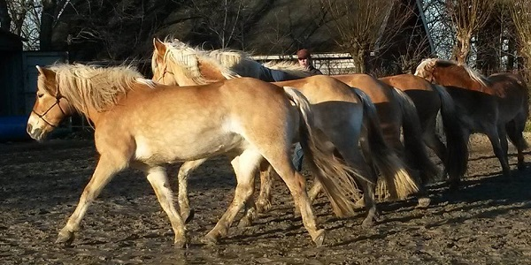 Principe 3: Hoe communiceer jij met je paard?