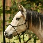 Man-van-paardenmeisje schrijft over 'Natural Horsemanship'