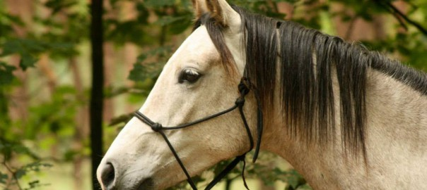 natural horsemanship, touwhalster