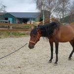 Leer een angstig paard ontspannen met het 'pauzehokje'
