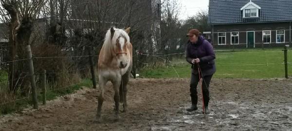 lichaamstaal, parelli, haflinger, natural horsemanship