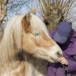 Parelli principe 7: Paarden leren mensen, mensen leren paarden