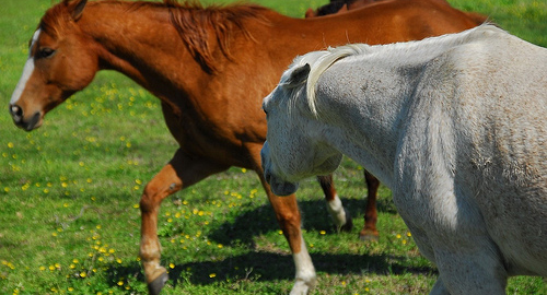 dominant paard, dominantie, lichaamstaal, rianne dekker