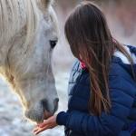 Waarom je paard begrijpen lastig kan zijn