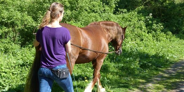 Paardje spelen voor volwassenen