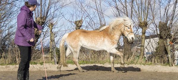 sarina gul, pup, paardenpersoonlijkheden, paarden karakter