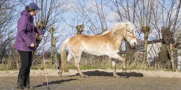 Mijn paard heeft een persoonlijkheid!