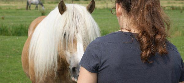 intentie, horse in mind, rianne dekker, focus