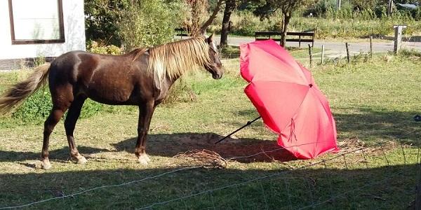 Schriktraining zonder training – zo leren paarden van elkaar