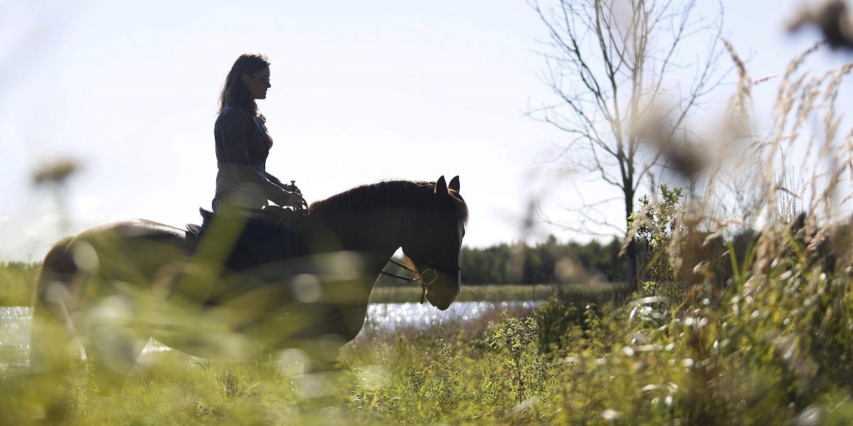 Gymnastiseren op buitenrit – hou je paard soepel en fit op een leuke manier