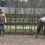 Waarom paarden niet houden van gestresste mensen