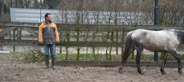 stress, paarden stress, paardencoaching