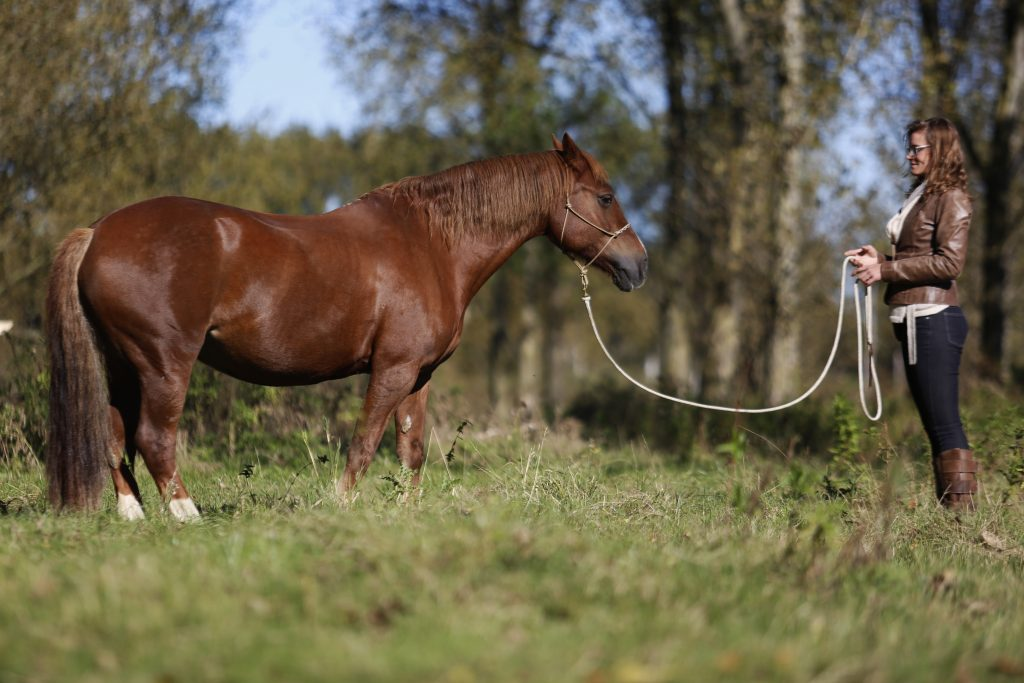 lichte hulpen, paard lichter op de hulpen, eva lazet